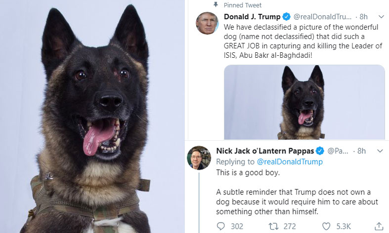 Trump Tweets Pic Of Military Dog Who Chased Baghdadi