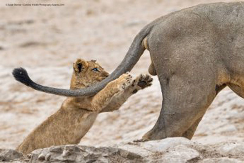 """Sarah Skinner's photo titled """"Grab life by the..."""" was named winner of Comedy Wildlife Awards"""