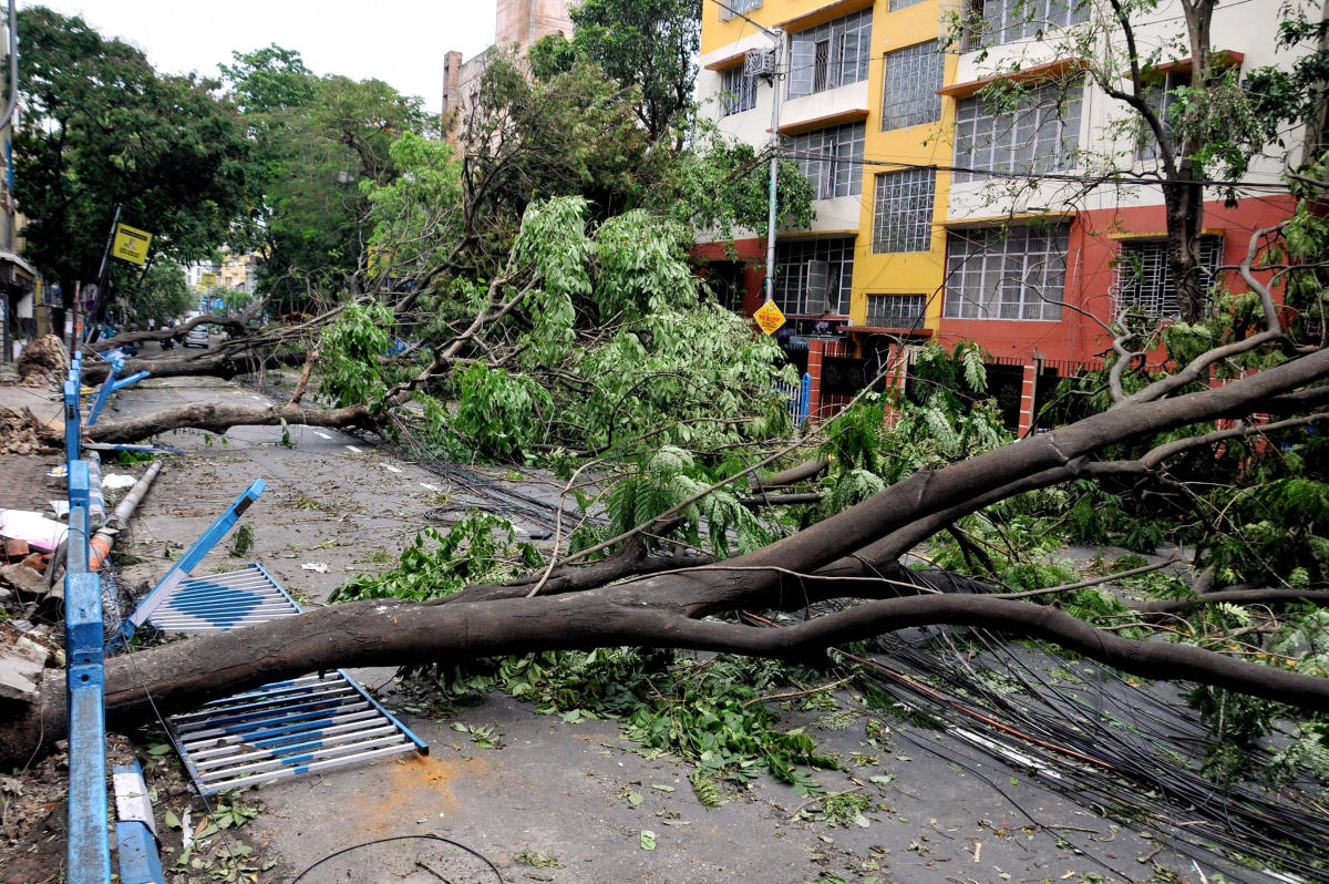 Uprooted trees lying on a street due to Super Cyclone Amphan