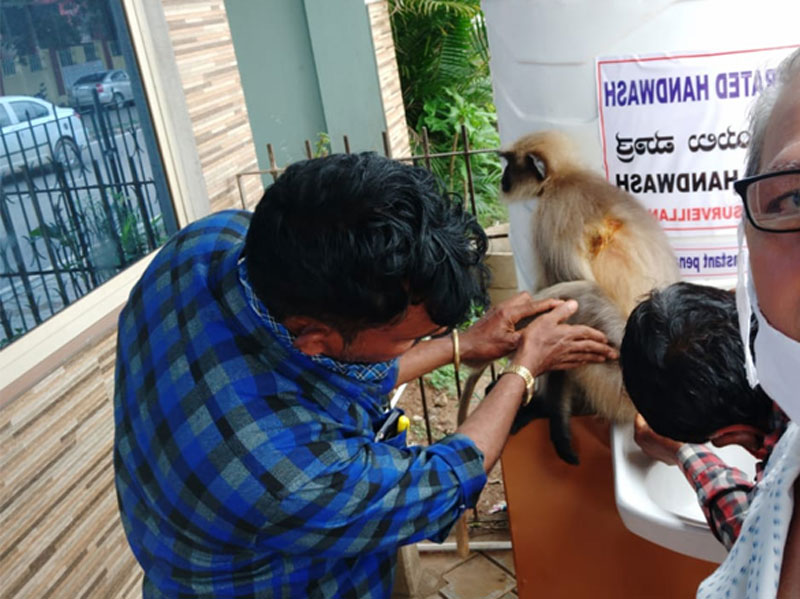 Monkey Asks Treatment For Wound in Dandeli